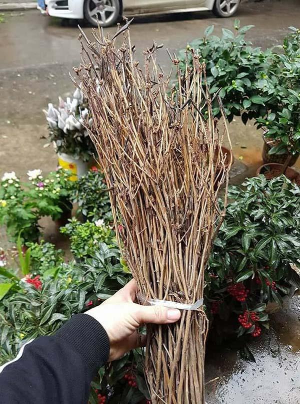 Bán sỉ bó 40 cành hoa đỗ quyên ngủ đông